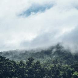 fog forest pclandscapes landscapes