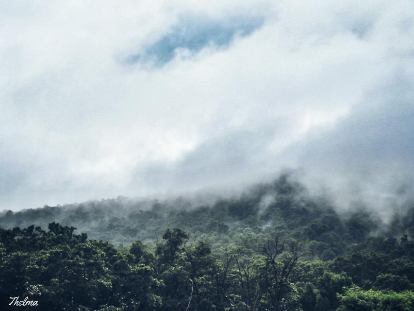 #fog #forest