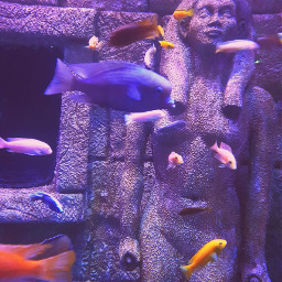 colorful fishes aquarium istanbul