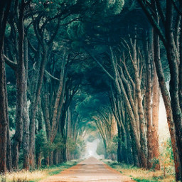 background road forest trees scene nature freetoedit