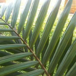 nature plant greennature myphotography