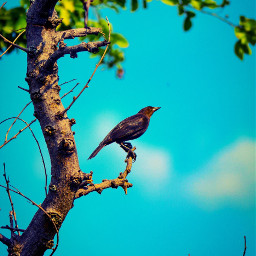 birds aves natgeo natgeoadventure natgeotravel