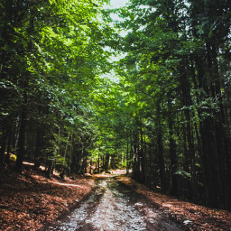 nature green forestroad trees yellow pcnaturephotography