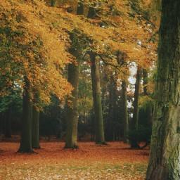 autumn autumnleaves autumnart trees sun2filter freetoedit