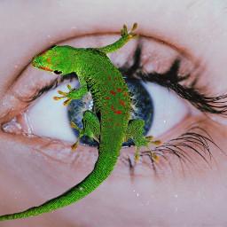 freetoedit eye lizard