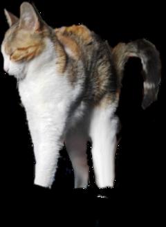 cat kitty freetoedit