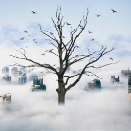 freetoedit modernity clouds mist city