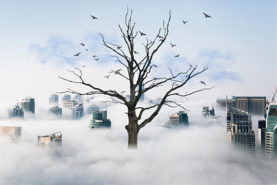 #freetoedit  #modernity #clouds #mist #city #tree #surreal #myedit