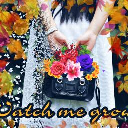 freetoedit dailychallenge bagday handbagday bag ircchicblackhandbag
