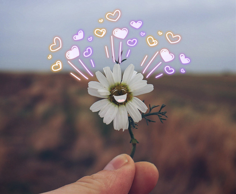 Happy Friday my fellow picsartist's #daisy #flower #stickers #happiness #freetoedit