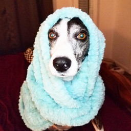 freetoedit photochallenge scarf pcscarf