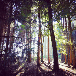 freetoedit wood sunlight trees nature