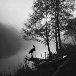 freetoedit nature sea boats stillness