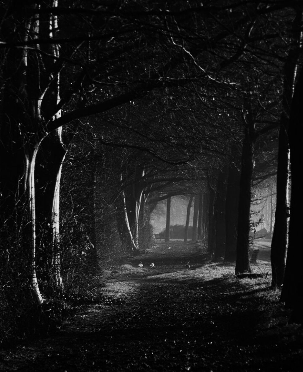 freetoedit creepyforest creepy forest suspense