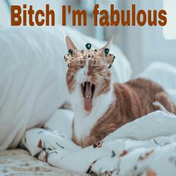freetoedit piercing crown cat ircglobalcatday