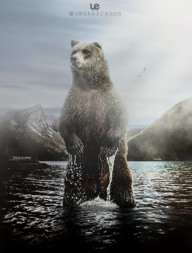 #myedit #remix #surreal #surrealism #animals #nature #interesting #fantasy #fantastic #love #bear  #doubleexposure #photography #colorful   #freetoedit