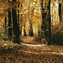 freetoedit goldenautumn autumnforest magicseason walkinforest