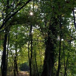 freetoedit naturepatterns
