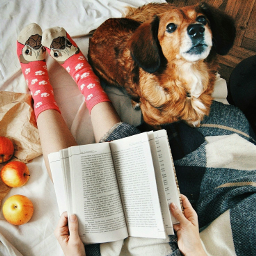sundaymorning dogowners doglovers cozytime haveagoodweekend