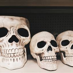 skulls halloween shelf props photography freetoedit