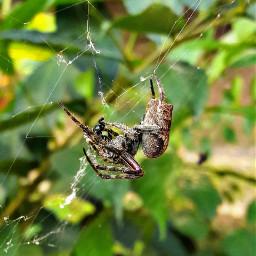 freetoedit naturepatterns spider miphoto