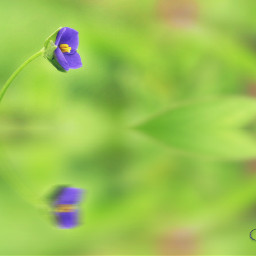flower photography macro