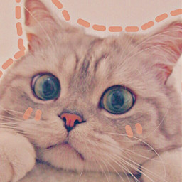 cat meow😺 catlove cuteanimals cute