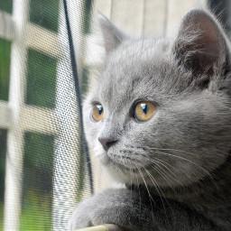 cat pets petlove nature odin