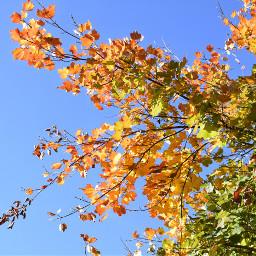 freetoedit autunno foglie