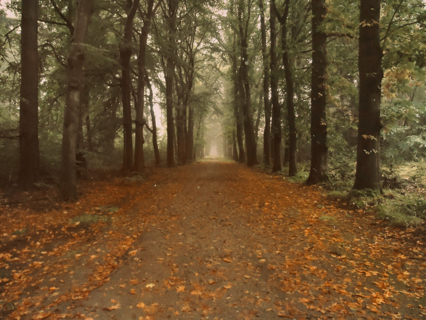 #trees #woods #autumn #autumnleaves #autumncolors #autumnfeels #photography #myphoto  #freetoedit