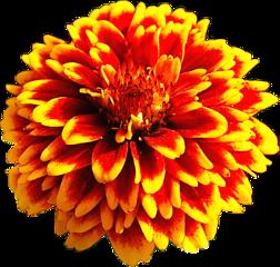 flower yellowflower redflower clove nice freetoedit