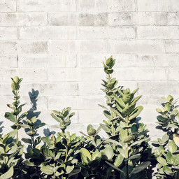 pastel plants gray leaves green freetoedit