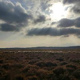 dutch dutch_nature nederland netherland holland