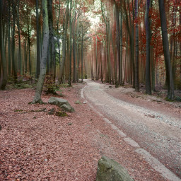 freetoedit road forest blureffect autumn