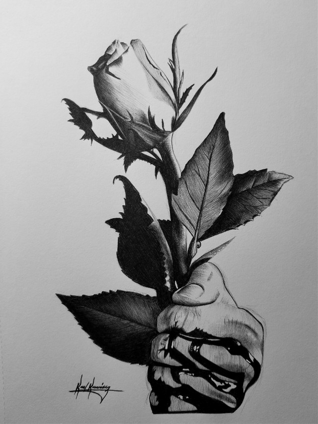 Latest drawing with a pen #art #artoftheday #drawing #rose #beautiful #blackandwhite