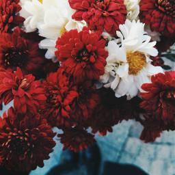 freetoedit flower red mood