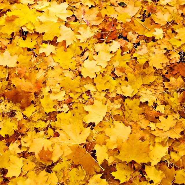 #freetoedit #fall #autumn #nature #leaf