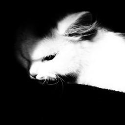 cat blackandwhite lowkey