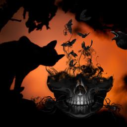 halloweenart halloween halloweenfun freetoedit ircblackcat