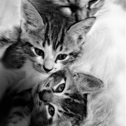 blackandwhite photography cats cute animals
