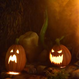 haloween citrouille noeffect pcpumpkin pumpkin