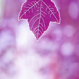 outlinesart autumnleaf bokeh freetoedit