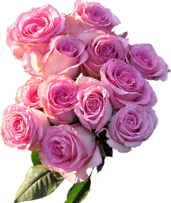 rose pink bouquet bouquetofflowers pinkrose freetoedit
