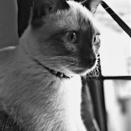 colours photography cats cute animals