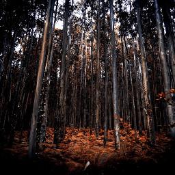 freetoedit forest orange nature dark