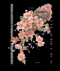 bmrs flowers birds freetoedit