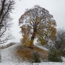 tree autumn snow