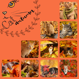 cat november autumn leaf leaves freetoedit ccfallcollage