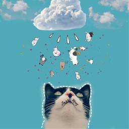 freetoedit catrain raincat magiccat kawaii