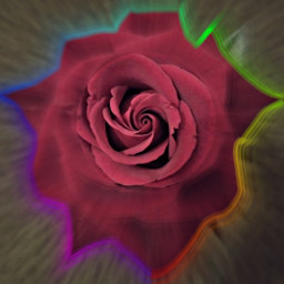 freetoedit роза🌹 rose роза